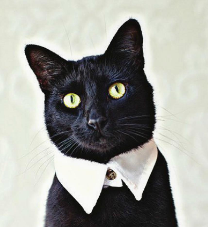 backyard burial company cat formal