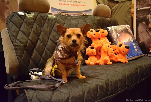 Jada visiting 4Knines at BlogPaws