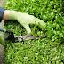 Recrutam-se Jardineiros em diversas partes do país (Salários de 45€ por dia ou superior)