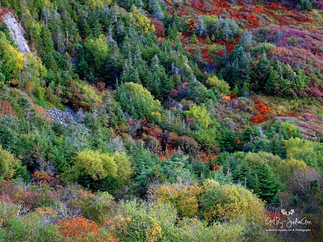 Newfoundland Autumn Forest