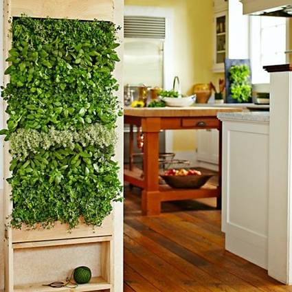 Tips For Decorating The Kitchen With Hanging Plants 5