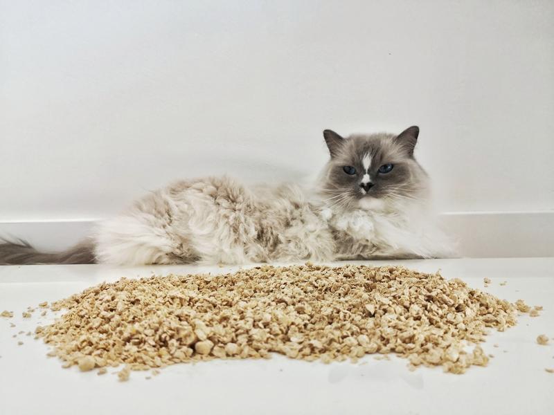 żwirek dla kota, Calitti, żwirek Calitti, Calitti opinie, Calitti recenzja, Calitti drewniany, drewniany żwirek dla kota, nowy żwirek dla kota, naturalny żwirek dla kota, koci tester