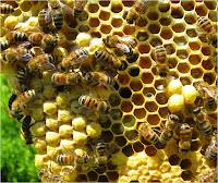 7 manfaat madu bagi kesehatan