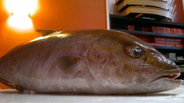 Carne do peixe 'Olho de Boi' pode ter relação com doença misteriosa na Bahia