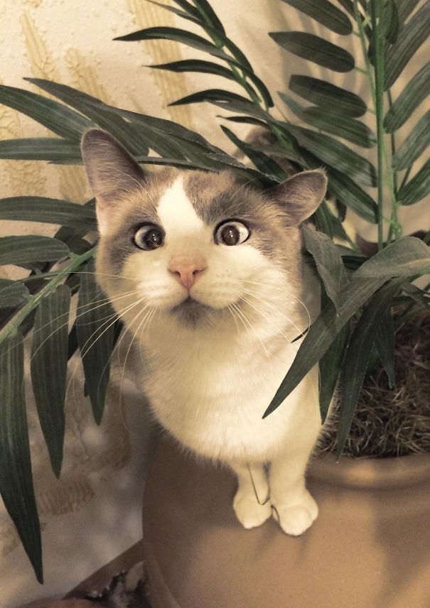 Cat version of Jack Hanna