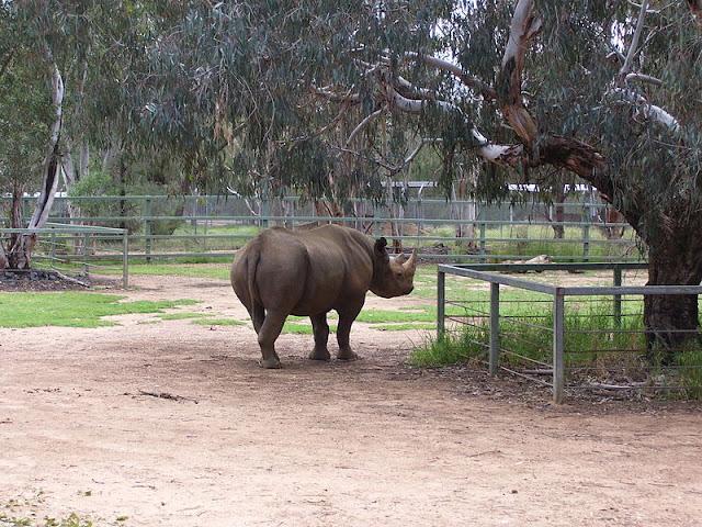 black-rhinoceros-list-trend