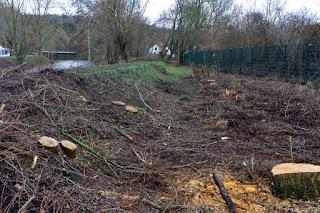 Bischleben Baumfällungen Hochwasserschutz