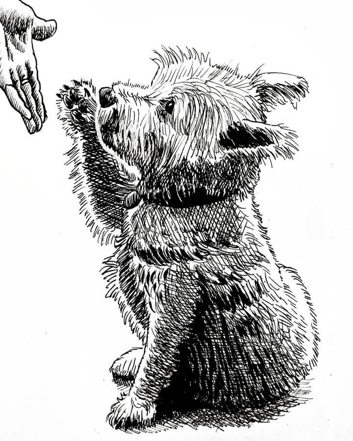 02-Westie-High-Five-Tim-Rees-www-designstack-co