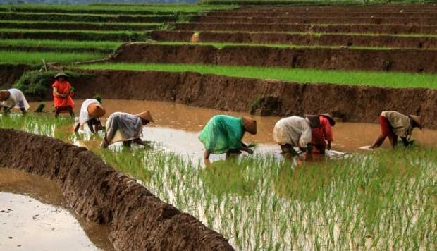 Apa jadinya dunia tanpa Petani?