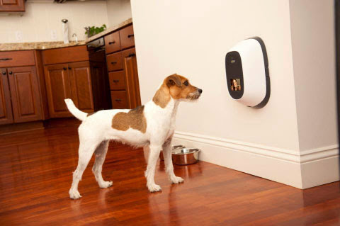 Functional Smartphone Controlled Dog Gadgets (15) 6