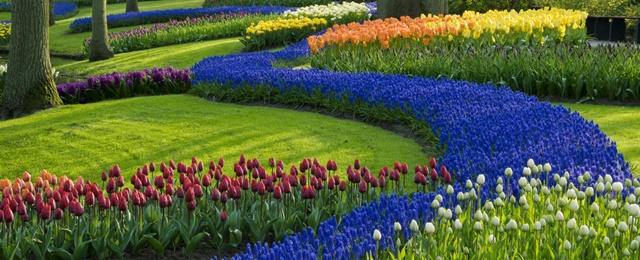 Plantas rasteiras para seu jardim