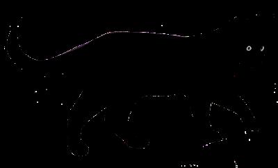 Gata negra desconecta disco duro