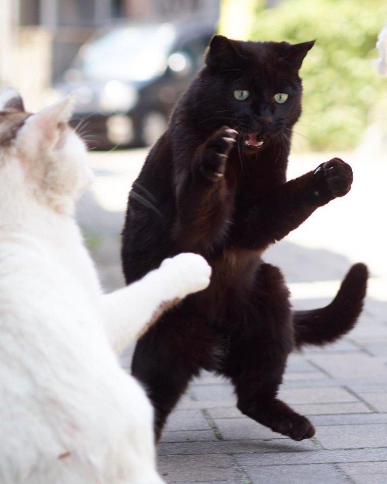 Unduh 68+  Gambar Kucing Ngeselin Lucu HD
