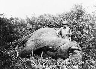 Roosevelt in a Safari