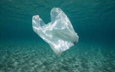 Bolsas hechas de yuca contribuyen al mar