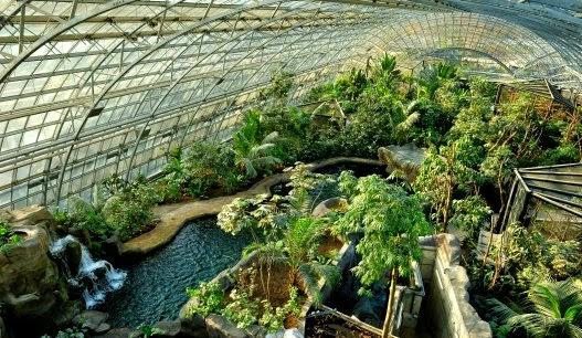 tante piante nella serra dello zoo