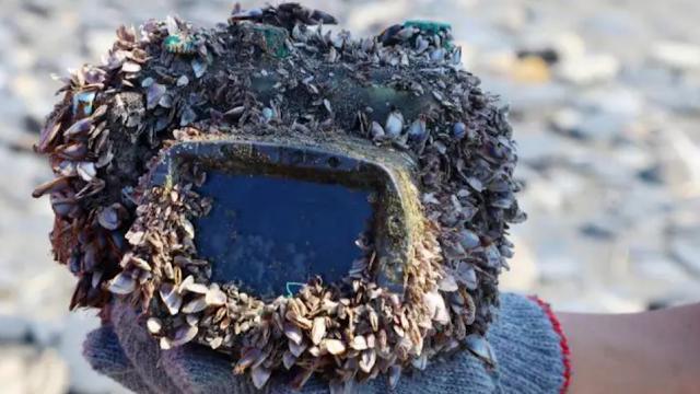 Anak Sekolah Menemukan Benda Tak Lazim saat Membersihkan Pantai, Ternyata Ada Kisah Unik di Baliknya