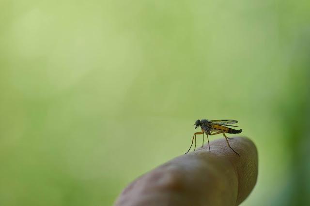 لماذا لا توجد حشرات عملاقة على الأرض ؟