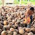 Proses Pengolahan Minyak Goreng Kelapa / Kelapa Sawit (Crude Palm Oil)
