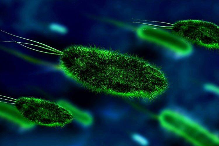 Dünya dışında bir tane bakteri dahi yaşıyorsa uzayda yaşam var mı sorusunun cevabı bulunmuş demektir.