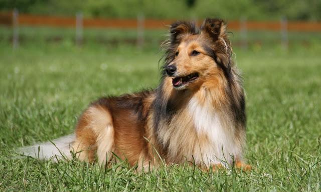 Kepribadian Dari Anjing Untuk pribadimu
