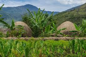 Biaya Kirim Jawa & Papua