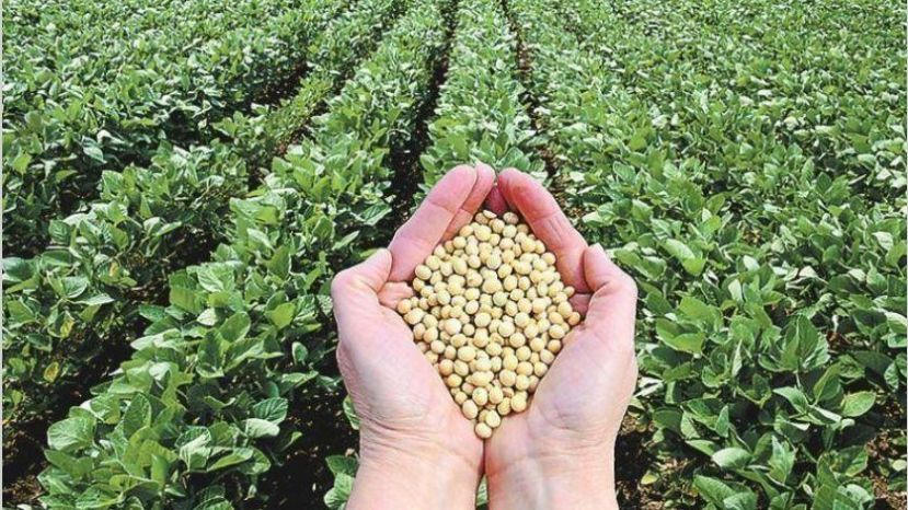 Por las retenciones crecen las consultas para comprar campos en Uruguay