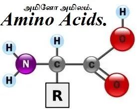 அமினோ அமிலங்கள் - Amino Acids - Part 1.