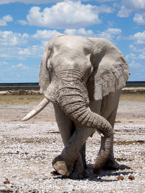 Elephant in Etosha National Park in Namibia The Touristin Dorothee Lefering
