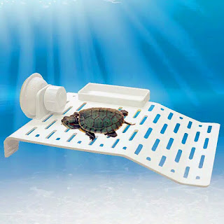 basking-kura-kura-akuarium.jpg