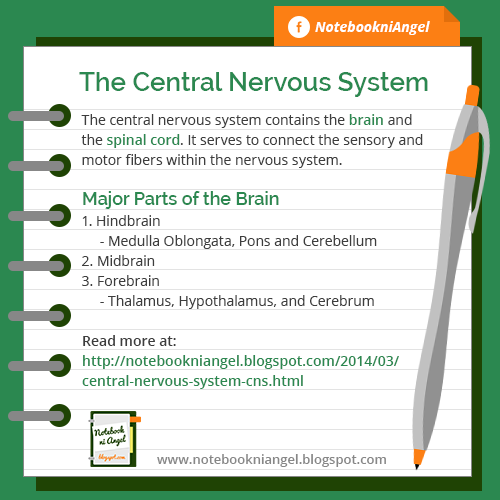 The Central Nervous System - definition and major parts of the brain.