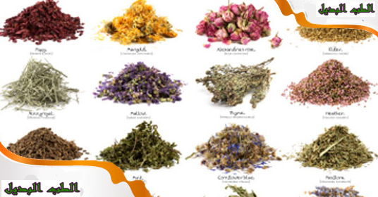 اشهر النباتات الطبية المستخدمة في الطب البديل