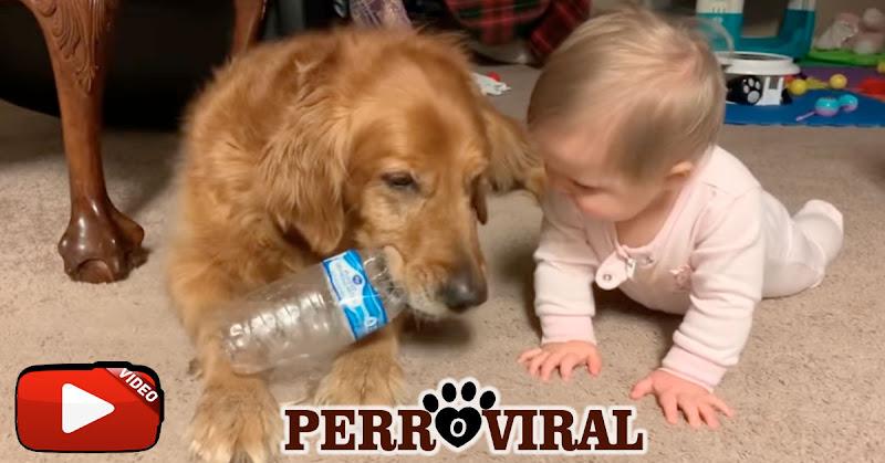 Estos perros demuestran ser los mejores amigos de los bebés
