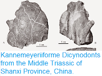 http://sciencythoughts.blogspot.co.uk/2015/03/kannemeyeriiforme-dicynodonts-from.html