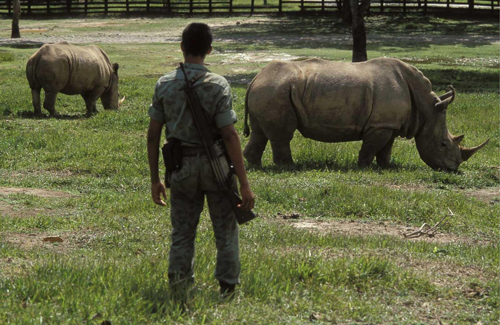 Un soldado observa un par de rinocerontes cautivos en la hacienda.