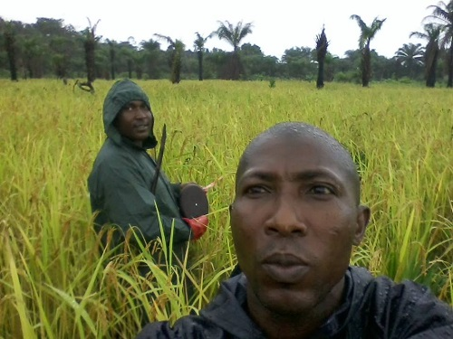 It's a FADAMA supported rice field located in Ibeju Lekki area of Lagos State.