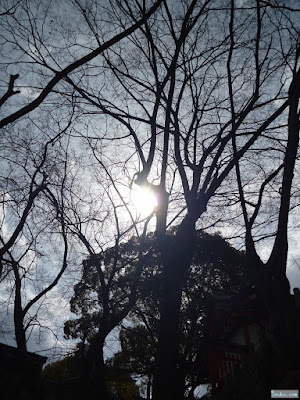 高津宮太陽と高倉稲荷神社の本殿