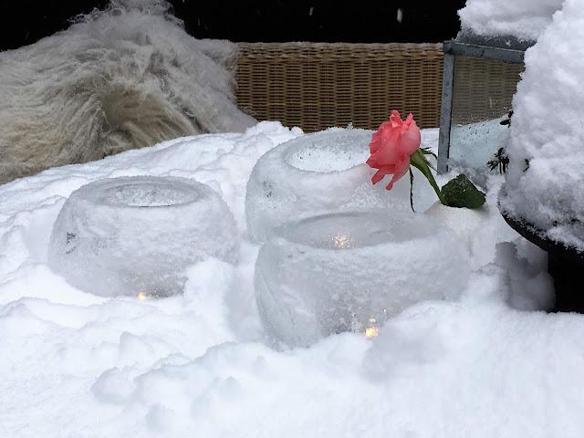 Vinterpoesi i hagen - Islykter og en rose IMG_4400 (2)-min