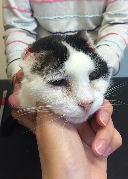 Elderly cat Dotty following her operation