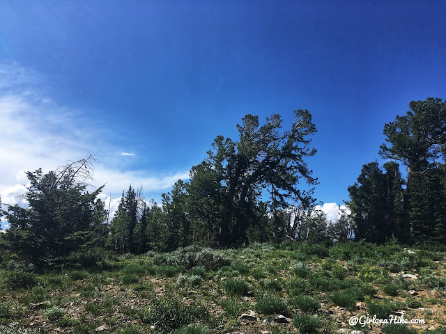 Hiking to Bridger Peak, Rich County High Point