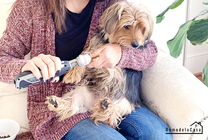 How to get your pet used to get its nails trimmed