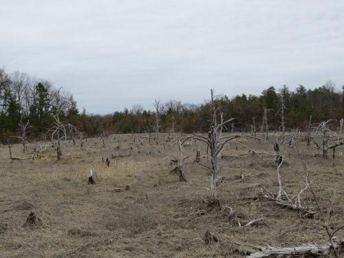 Dead Horse Marsh
