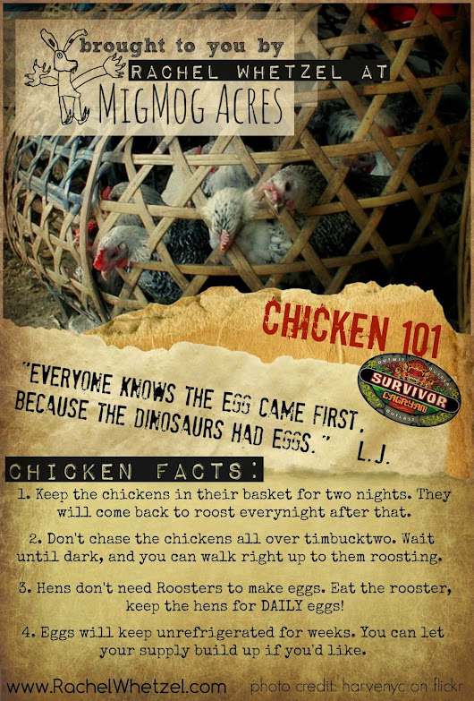 How to Survive CHICKENS on Survivor