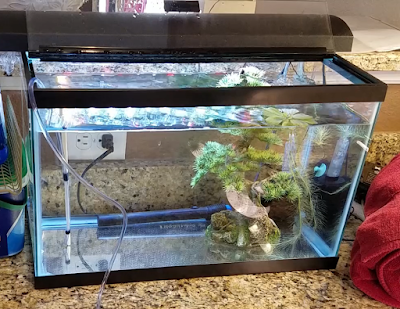 10-gallon quarantine tank for aquarium fish