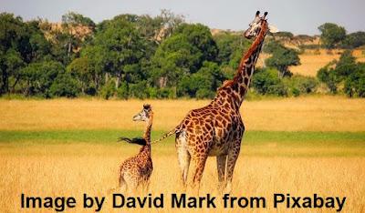 Essay über die Erhaltung von Wildtieren