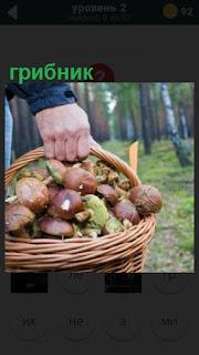 275 слов человек с корзиной грибов в лесу 2 уровень