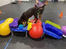 exercício de fisioterapia veterinária