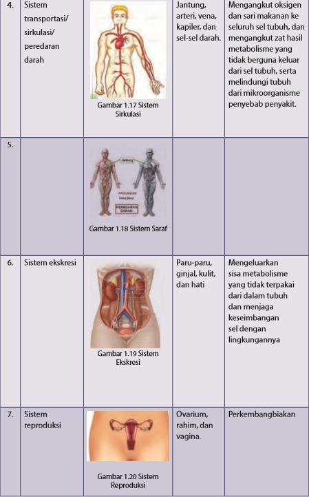 Sistem Organ - Pengertian, Fungsi Anatomi, Gambar, Contoh, Tabel