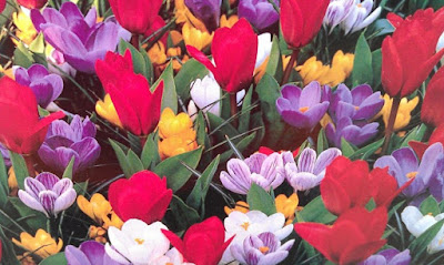 An assortment of brightly colored flowers