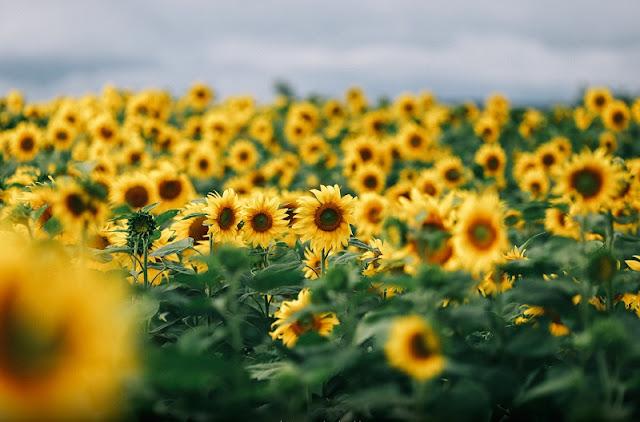 Beautiful flowers seasons in Dalat 1